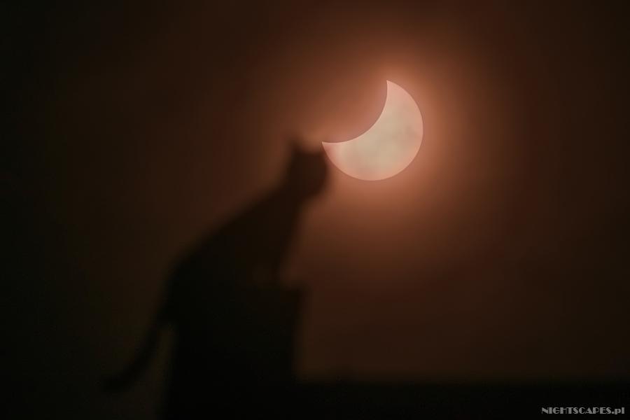 Częściowe zaćmienie Słońca 20 marca 2015. Toruński kot