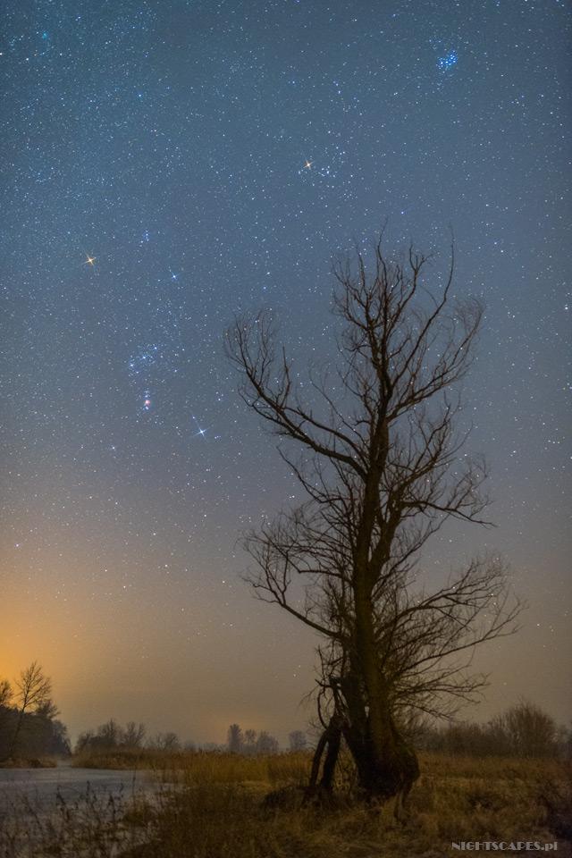 Zimowe niebo. Gwiazdozbiór Oriona.